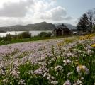 Blumenwiese Leinöy